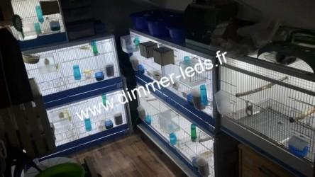Batterie elevage avec Éclairage Dimmer-leds Ref 003