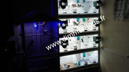 Batterie elevage avec Éclairage Dimmer-leds Ref 009