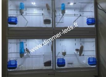 Batterie elevage avec Éclairage Dimmer-leds Ref 011