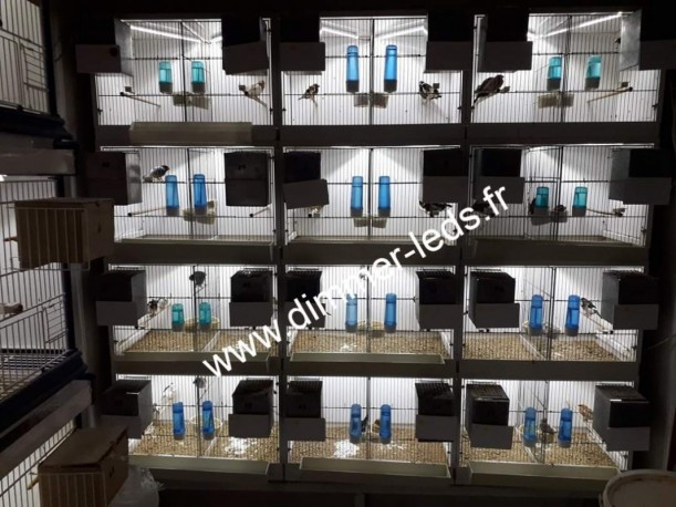 Batterie bois avec Éclairage Dimmer-leds Ref 008