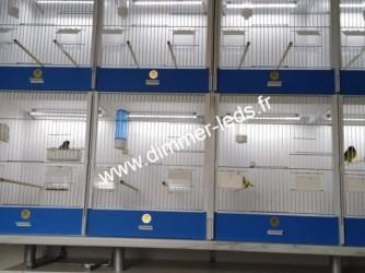 Batterie elevage PVC avec Éclairage Dimmer-leds Ref 002