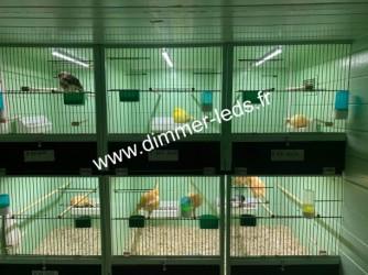 Batterie elevage PVC avec Éclairage Dimmer-leds Ref 003