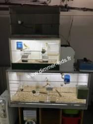 Batterie elevage PVC avec Éclairage Dimmer-leds Ref 005