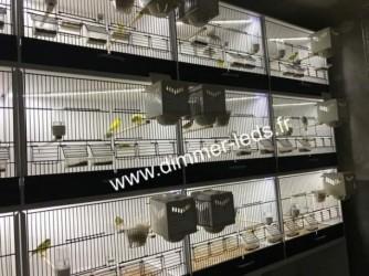 Batterie elevage PVC avec Éclairage Dimmer-leds Ref 009