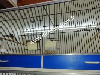 Batterie elevage PVC avec Éclairage Dimmer-leds Ref 010