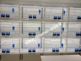 Batterie élevage 2GR avec Éclairage Dimmer-leds Ref 003
