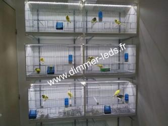 Batterie élevage 2GR avec Éclairage Dimmer-leds Ref 004