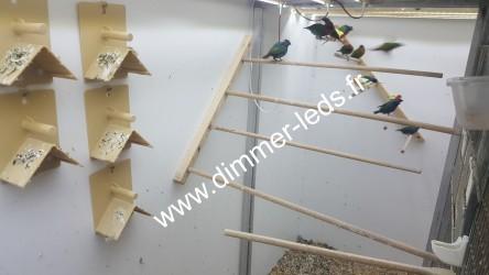 Volière bois avec Éclairage Dimmer-leds Ref 009