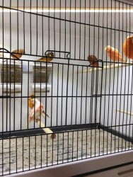 Projet C1 : Cages Divers & Ruban Leds