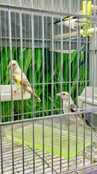 Projet M2 : Cages Molinari & Ruban Leds