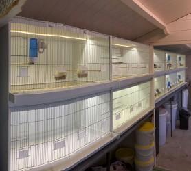 Projet C5 : Cages Divers & Ruban Leds