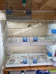 Batterie élevage Molinari avec Éclairage Dimmer-leds Ref 001