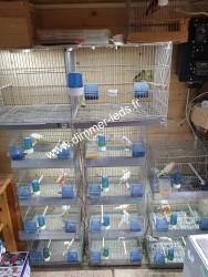 Batterie élevage Molinari avec Éclairage Dimmer-leds Ref 002