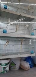 Batterie élevage Molinari avec Éclairage Dimmer-leds Ref 003