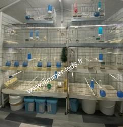 Batterie élevage Molinari avec Éclairage Dimmer-leds Ref 004