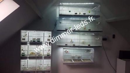 Batterie élevage Molinari avec Éclairage Dimmer-leds Ref 011
