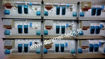 Batterie élevage Terenziani avec Éclairage Dimmer-leds Ref 040