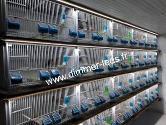 Batterie élevage Terenziani avec Éclairage Dimmer-leds Ref 037