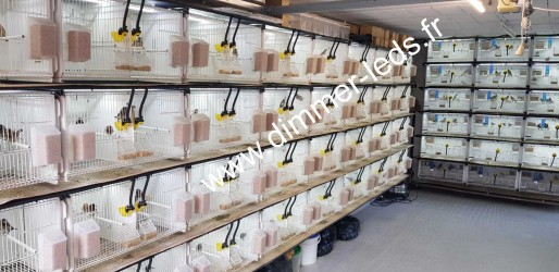 Batterie élevage Terenziani avec Éclairage Dimmer-leds Ref 012