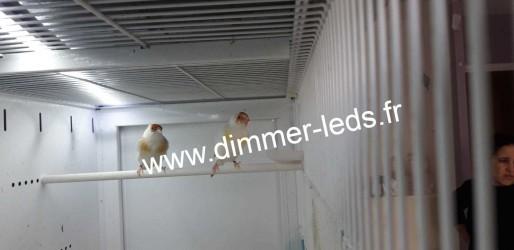 Batterie élevage Terenziani avec Éclairage Dimmer-leds Ref 008