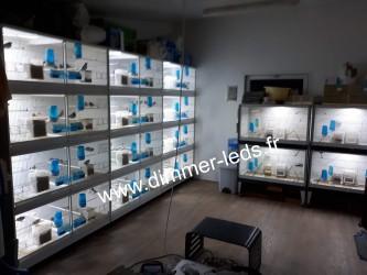 Batterie élevage Terenziani avec Éclairage Dimmer-leds Ref 007