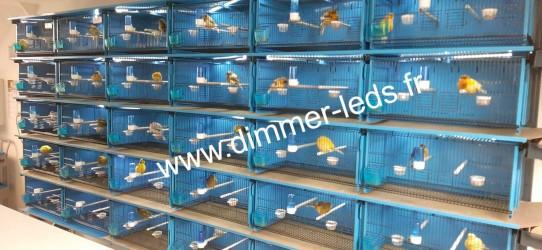 Batterie élevage Terenziani avec Éclairage Dimmer-leds Ref 006