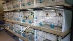 Batterie élevage Terenziani avec Éclairage Dimmer-leds Ref 003
