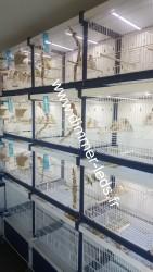 Batterie élevage Italgabbie avec Éclairage Dimmer-leds Ref 038