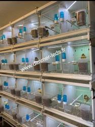 Batterie élevage Italgabbie avec Éclairage Dimmer-leds Ref 037