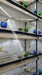 Batterie élevage Italgabbie avec Éclairage Dimmer-leds Ref 012