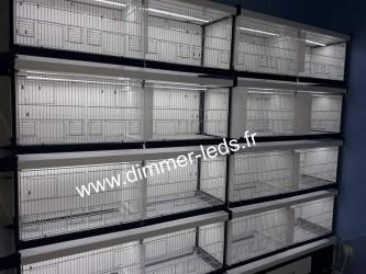 Batterie élevage Italgabbie avec Éclairage Dimmer-leds Ref 005