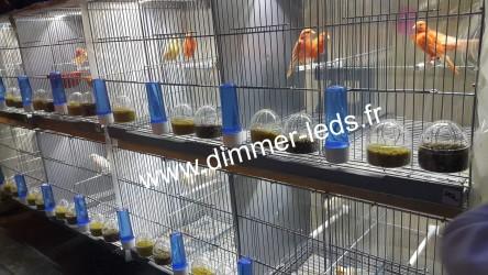 Batterie élevage RSL avec Éclairage Dimmer-leds Ref 004