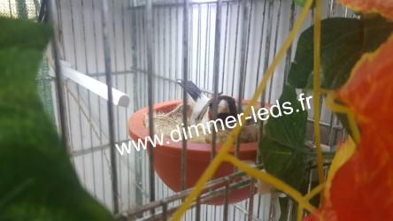 Batterie élevage RSL avec Éclairage Dimmer-leds Ref 005