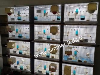 Batterie élevage NEW CANARIZ avec Éclairage Dimmer-leds Ref 001