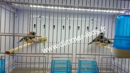 Batterie élevage NEW CANARIZ avec Éclairage Dimmer-leds Ref 003