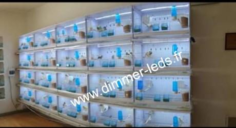 Batterie élevage NEW CANARIZ avec Éclairage Dimmer-leds Ref 004