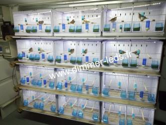 Batterie élevage NEW CANARIZ avec Éclairage Dimmer-leds Ref 007