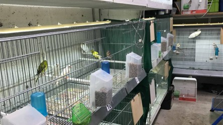Projet M1 : Cages Molinari & Ruban Leds