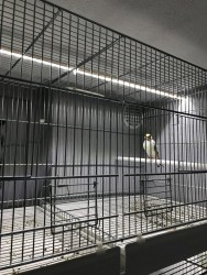 Projet M3 : Cages Molinari & Ruban Leds